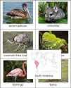 Animals of the World Cards