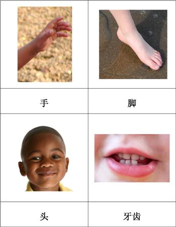 Chinese Parts of the Human Body Nomenclature Cards from Montessori ...
