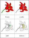 Parts of a Flower Nomenclature Cards