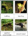 Types of Amphibians Nomenclature Cards