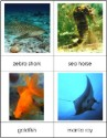 Types of Fish Nomenclature Cards