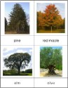 Types of Trees Nomenclature Cards