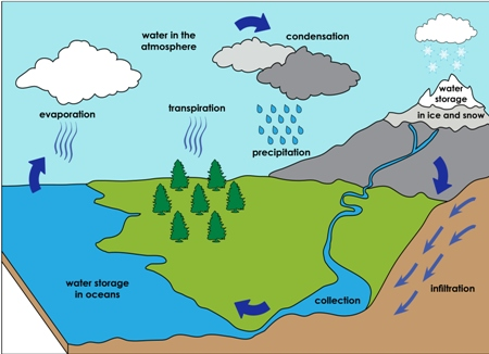 Pics Photos - Water Cycle Diagram With Labels For Labeled Diagram