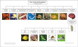 Animal Kingdom Chart & Masters
