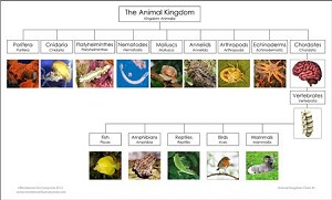 Animal Kingdom Chart & Masters UK