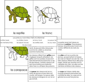 French Vertebrate Nomenclature Card Set