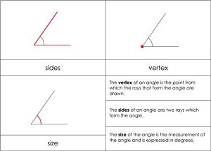 Parts of an Angle Nomenclature Cards