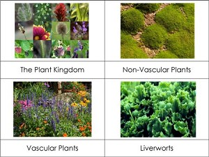 Plant Kingdom Nomenclature Cards