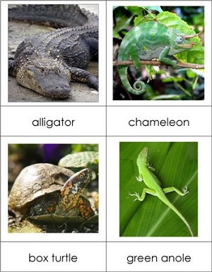 Types of Reptiles Nomenclature Cards