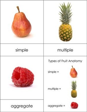 Types of Fruit Cards - Advanced
