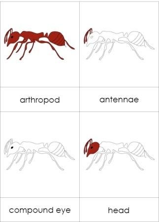 Parts of an Arthropod Nomenclature Cards